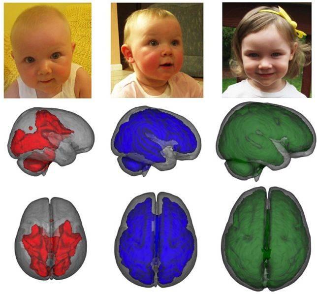 desarrollo cerebral y lactancia