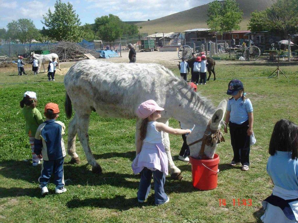 actividad con niños burrolandia