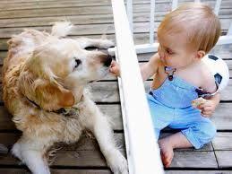 bebés y mascotas