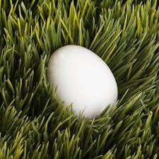 el huevo como alimentación en el embarazo