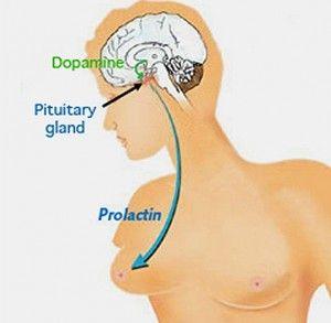 prolactina y problemas de fertilidad