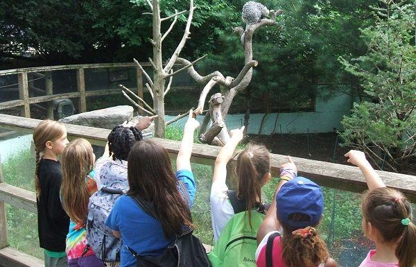 actividades divertidas zoo
