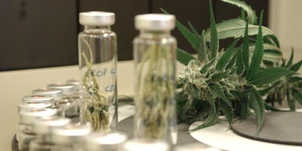tratamiento para los niños enfermos a base de cannabis