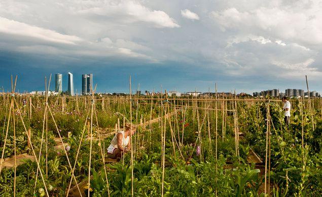 ventajas de enseñar a los niños a cultivar hortalizas