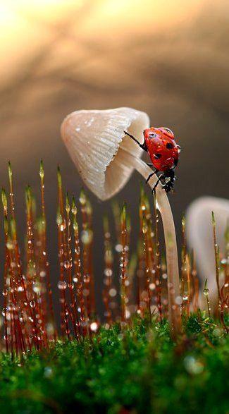 conocer la fauna en nuestro entorno