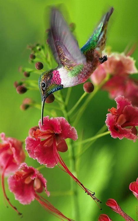 conocer la flora