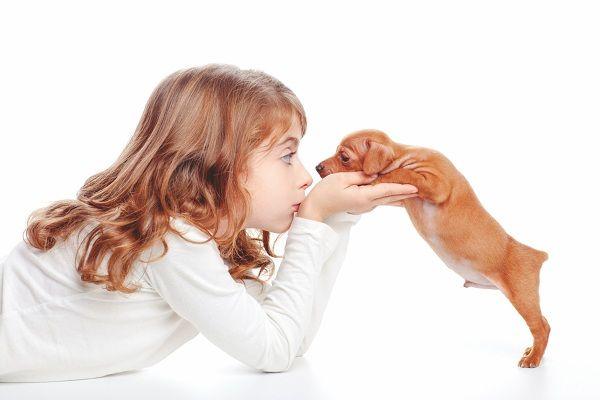 cómo cuidar una mascota