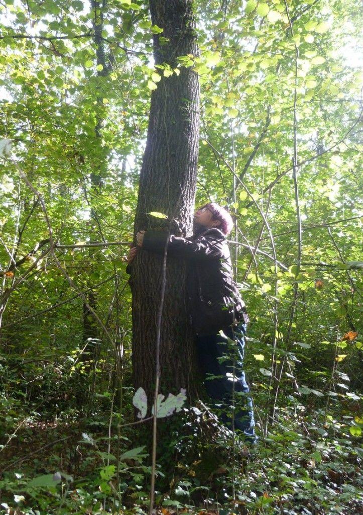 el bosque sanador